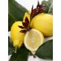 Kép 4/5 - Carrubaro citrom termés