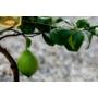 Kép 4/5 - Zagra bianca citrom zöld