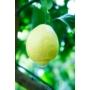Kép 3/3 - Amalfi citrom