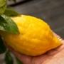 Kép 1/2 - Diamante citrom termés