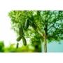 Kép 3/4 - ausztrál fingerlime citrom termés