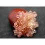 Kép 6/6 - ausztrál fingerlime citrom red termés