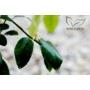 Kép 4/4 - Lime Romana