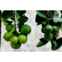 Kép 3/5 - Rangpur mandarin termések