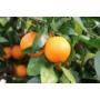 Kép 4/4 - Navelina narancs