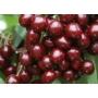 Kép 1/2 - Bigarreau Burlat cseresznye