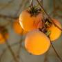 Kép 1/2 - datolyaszilva termése vaniglia