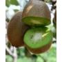 Kép 1/3 - Kiwi hayward termés