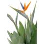 Kép 2/4 - pompás papagályvirág virága közelről