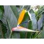 Kép 4/4 - pompás papagályvirág virága közelről