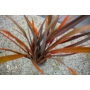 Kép 2/3 - új-zélandi kender vászonfű barna levelei